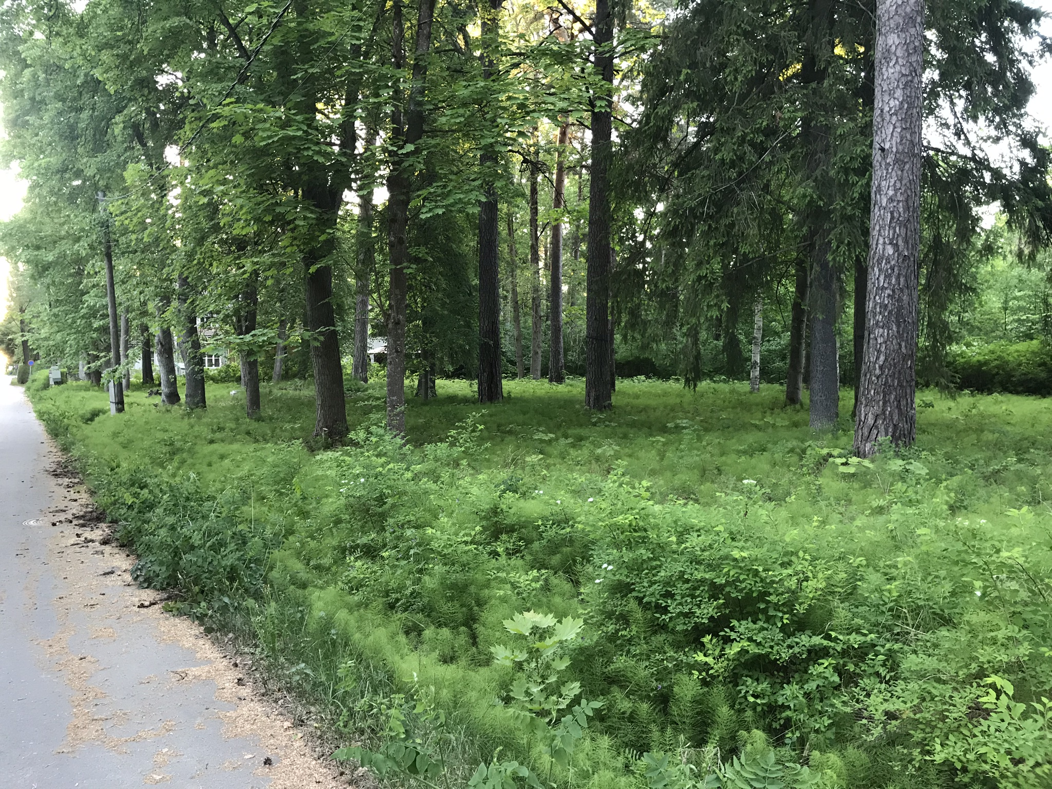 Supeluse 6, Narva-Jõesuu